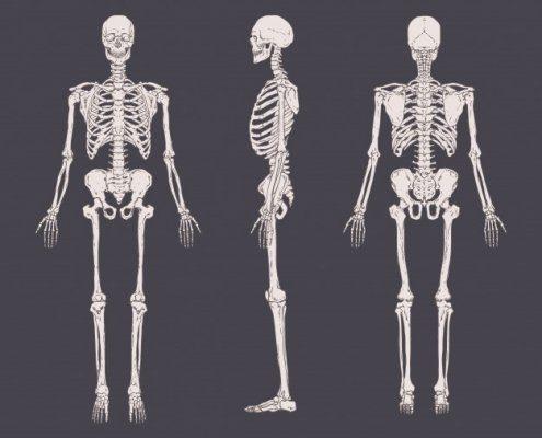 استخوان های قدامی بدن
