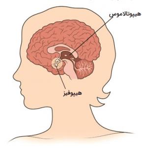 غدد درون ریز مغزی
